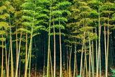 Yongchuan District, Chongqing Dasan Bamboo Bamboo Scenic — Stock Photo