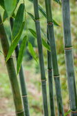 Nanchuan District, Chongqing Wenfengta scenic bamboo — Stock Photo