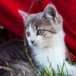 Stock Photo: Little, homeless kitty