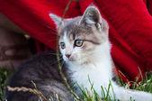 Weinig, dakloze kitty — Stockfoto