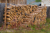 Stacked of firewood laying — Stockfoto