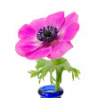 Stock Photo: Purple flower in blue bottle