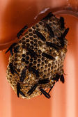Beehive in construction — Stockfoto