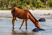 Horse drinking at lake — Stock Photo
