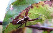 Macro photography of spider — Stock Photo