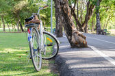 White Bicycle with Basket — Stock Photo