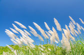 Wind blowing through flower grass — Stock Photo