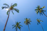 Coconut tree with blue sky in sunny day — Stock Photo