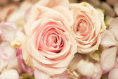 Beautiful Roses as a background — Stock Photo