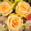 Beautiful Roses as a background — Stockfoto