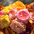 Beautiful Roses as a background — Foto de Stock