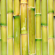 Uniform background of green reeds — Stock Photo