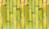 Uniform background of green reeds — Stock Photo