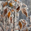 Stock Photo: Frozen yellow leaves