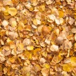 Background of yellow autumn leaves — Stock Photo