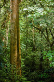 Foliage of rainforest — Stock Photo