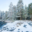 Wintry forest near lake panorama — Stock Photo