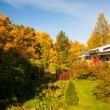 Bright autumn colors in backyard trees — Stock Photo