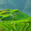 Rice terraces of longshen in china — Stock Photo