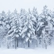 Stock Photo: Forest trees covered in snow