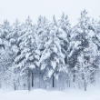 Forest trees covered in snow — Stock Photo #31413807
