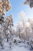 Forest full of snow — Stock Photo
