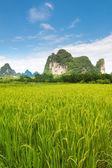Idyllic photo of rice fields in southern china — Stock Photo