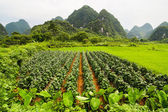 Agriculture and beaturiful karst mountains — Stock Photo