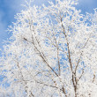 Frost covered tree — Foto de Stock