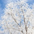 Frost covered tree — 图库照片