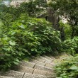 View over guilin stone stairs foreground — Stockfoto