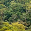 Aerial view of rainforest canopy — Stock Photo