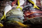 Fishes in asian night market — Stock Photo