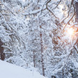 Sun shining through snowcapped trees — Stock Photo