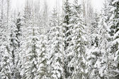Snow forest — Stock Photo