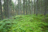 Moss in old forest — Foto Stock