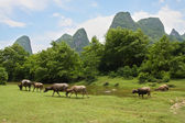 Herd pasture in beautiful landscape of china — Stock Photo