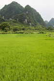 Rice fields and karst mountains landscape china — Stock Photo