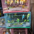 Birds for sale in bird market — Stock Photo #48305421