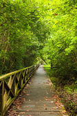 Boardwalk in dense rainforest — Stock Photo