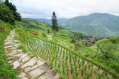 Stone pathway in longshen rice terraces — Stock Photo