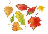 Tirée des feuilles d'automne — Vecteur