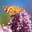 Orange butterfly on a lilac flower — Lizenzfreies Foto