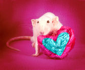 Rat heart, love — Stock Photo