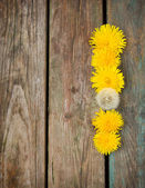 Yellow dandelions on a wooden background — Stock Photo