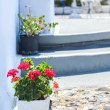 Traditional greek white flowerpot with red flowers ,Santorini island,Greece — Stock Photo