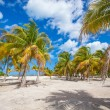 Palm grove on the sandy tropical beach at exotic country — Stock Photo