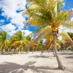 Palm grove on the sandy tropical beach — Stock Photo