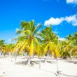 Palm grove on the sandy tropical beach — Stock Photo #27679261