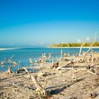 Exotic view of the Gulf of Mexico on the island Holbox — Stock Photo